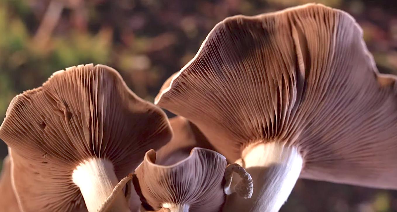 Fantastic Fungi (2019), Louie Schawartzberg Documentary